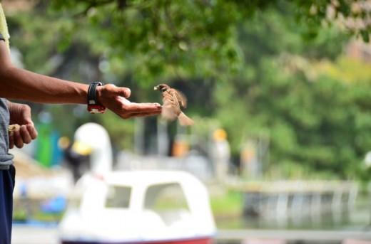 スズメに餌付け