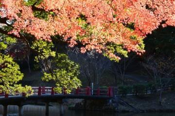 亀山公園・紅葉