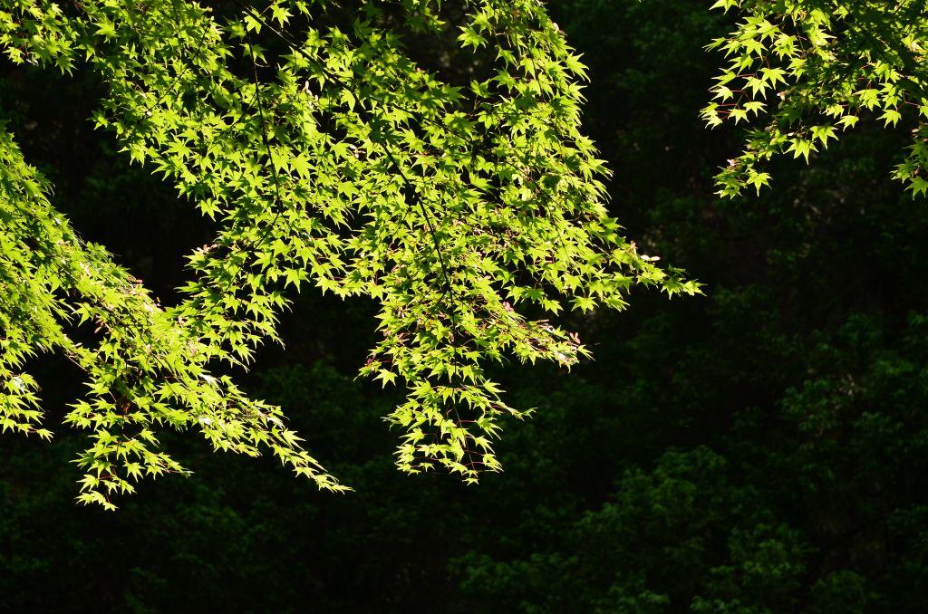 浮嶽ー羽金山・新緑