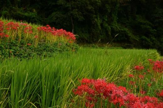 江里山の棚田